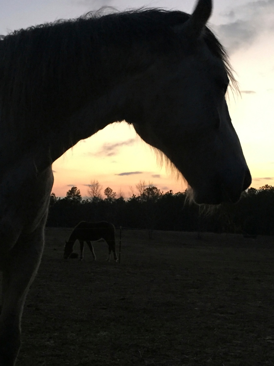 Smokey Jack at sundown