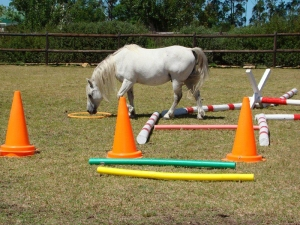 Horse walking near traffic cones, pool noodles and poles.