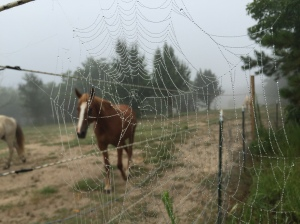 spider web and horse